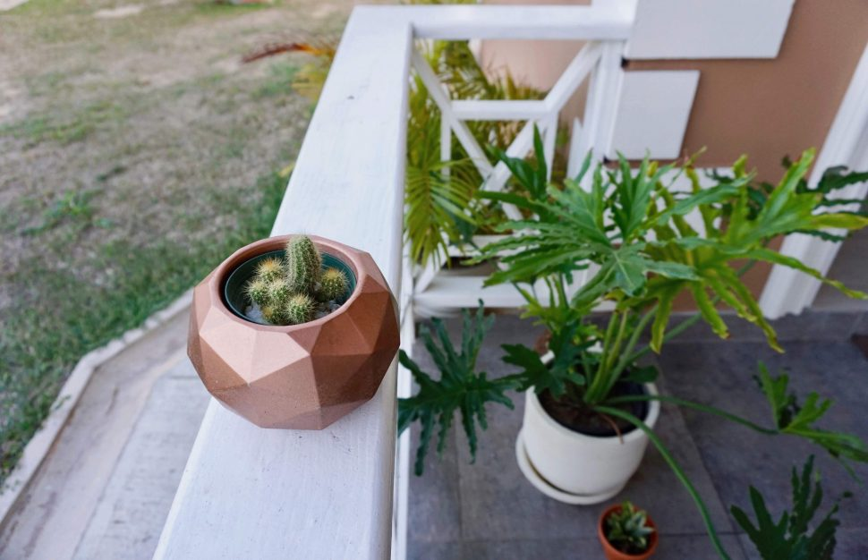 Download Confessions of a New Plant Mom - One Pot Living